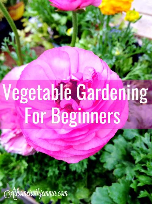garden-garden-how-to-grow-seeds-soil-vegetables-athomewithjemma