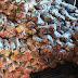 Decarga recupera 18 toneladas de alimentos desviada de rota