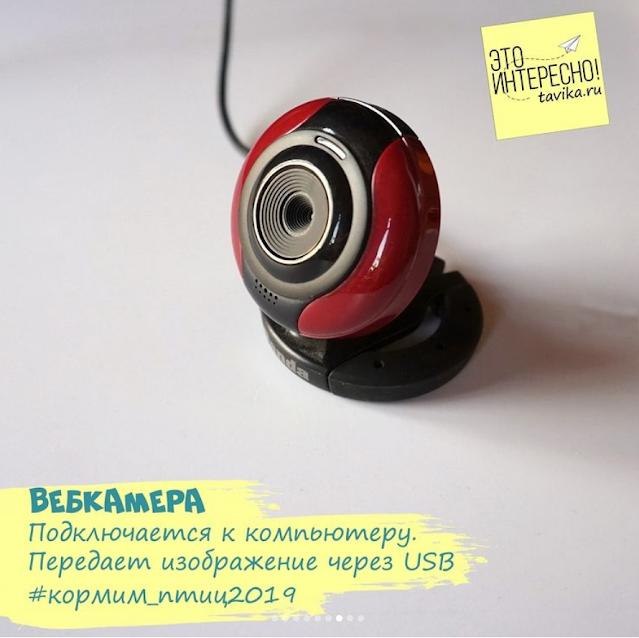вебкамера для съемки птиц