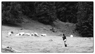 Pásztor a nyájával egy pádisi legelőn Erdélyben