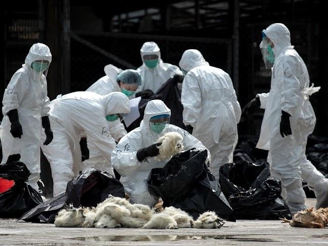 URGENTE! China tem primeiro caso no mundo de gripe aviária H10N3 em humano