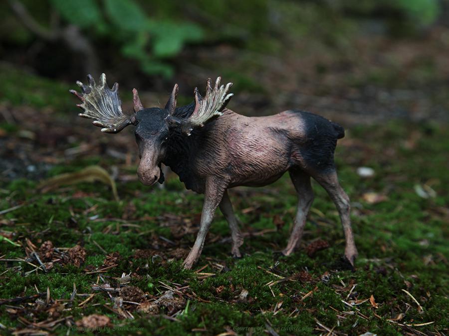 Elch (Massefigur [Elastolin]) – Elk Moose (Alces alces)