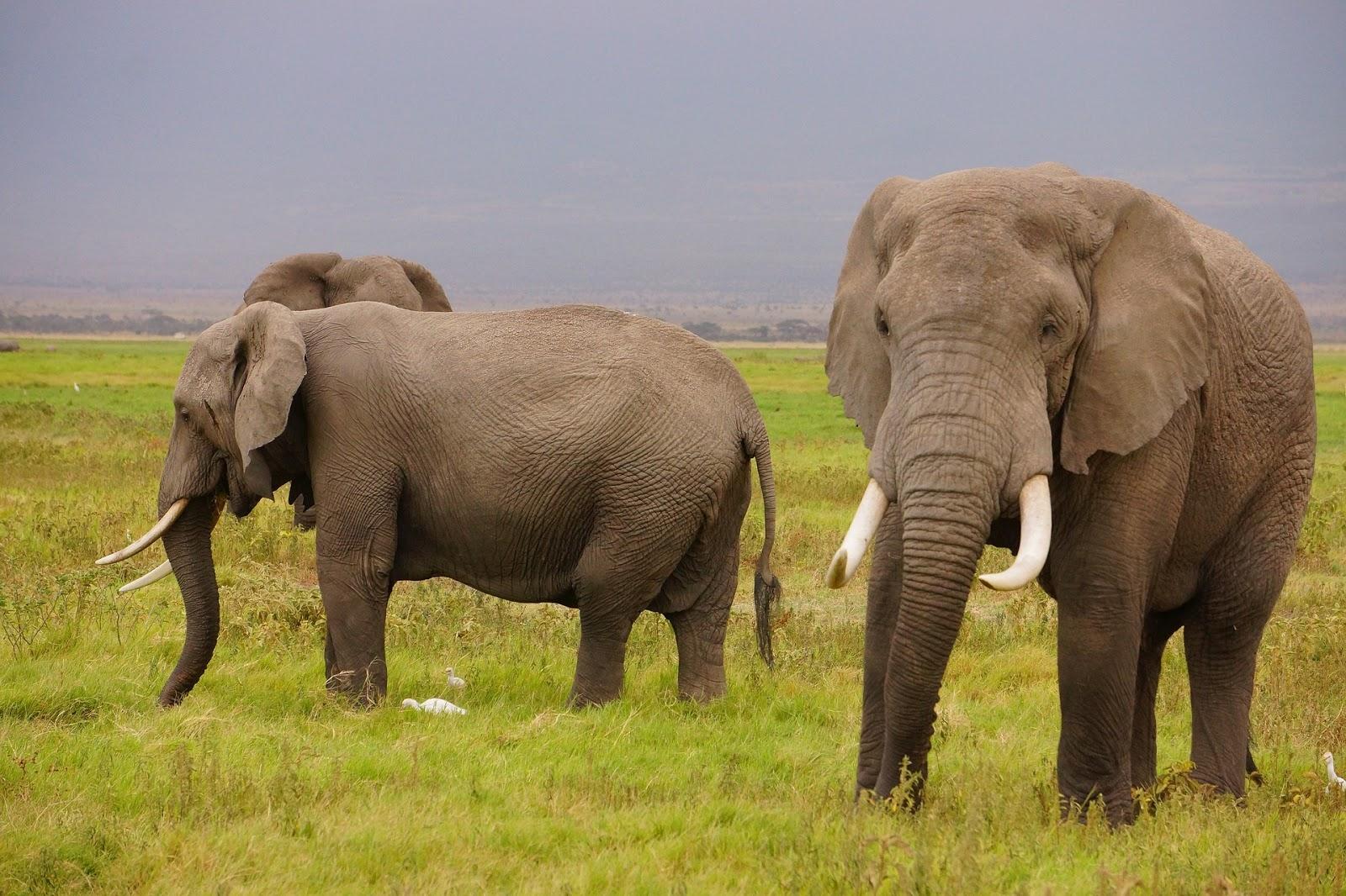 """El Ecosistema Hadoop (III) : Una gran diversidad """"biológica"""""""