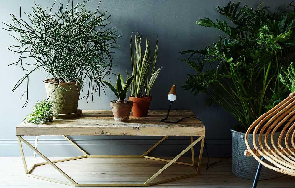 sei piante da appartamento più facili da curare