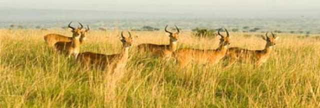 Udaipur Tourist Attraction : Kumbhalgarh wildlife sanctuary