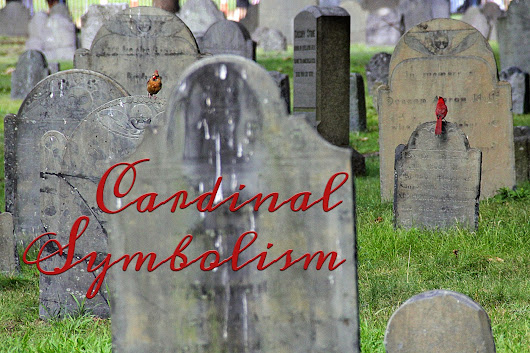 What Cardinals in the Cemetery Told Me