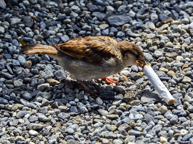 Cigarette Butts are The Worst Enemy of Marine Life