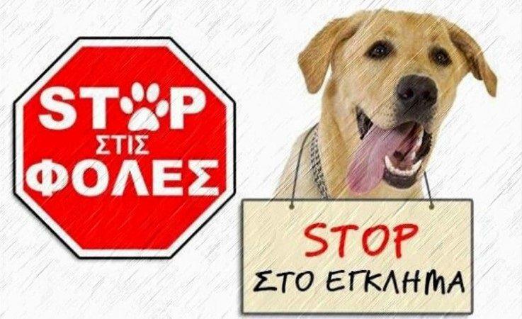 Καταδικάστηκε χωρίς αναστολή ο άνδρας που δηλητηρίασε σκύλο στο Μενίδι