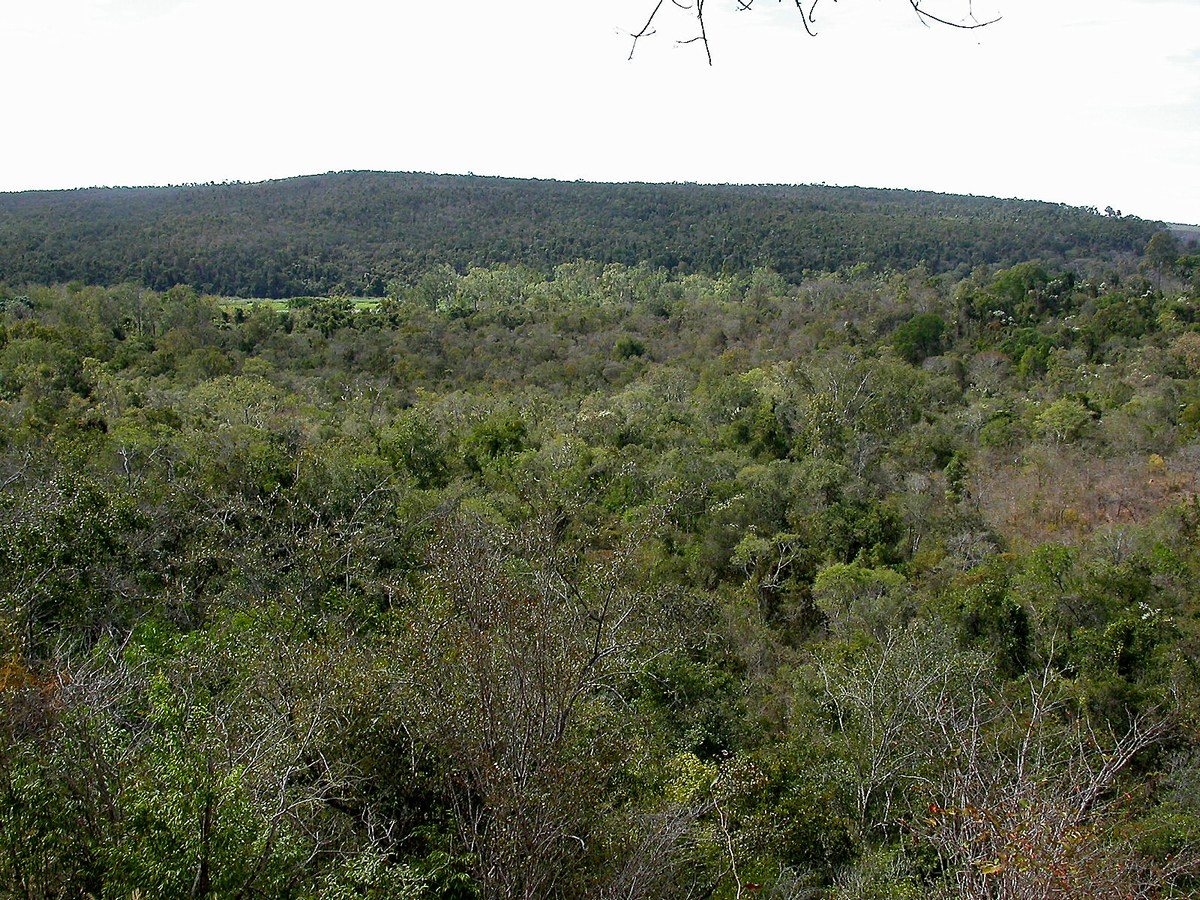 forêt sèche d'Ankarafantsika