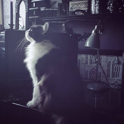 A large, black and white long-haired cat sitting on my desk. His front is white, his back is black, and he is very very fluffy. He is sitting and facing left, The Gothic arch mirror on top of the computer tower is visible. The Gothic architecture wallpaper and grey desk lamp are visible behind Archimedes the cat. He is sitting in front of a black switched-off flat-screen computer monitor. The cat has very long whiskers that catch the light. He has an adorable face.