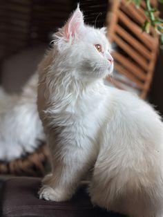 كيف تعرف اذا كانت قطتك مصابة بالاكتئاب ولماذا