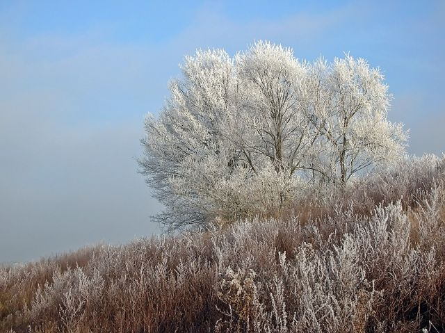 oszronione drzewa, zimowy pejzaż, przyroda, zima