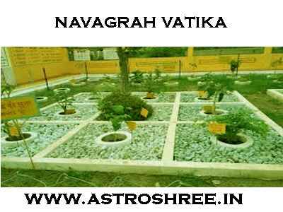 how to set up navagrah vatika