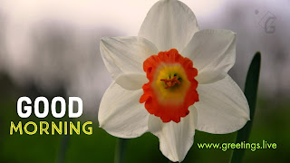 New-morning-with-white-Flower-greetings-HD-pic