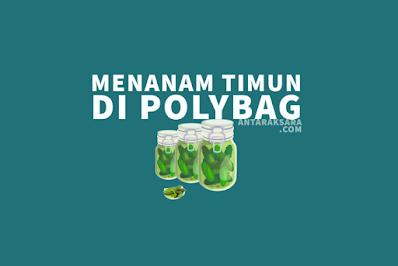 Cara Menanam Timun di Polybag