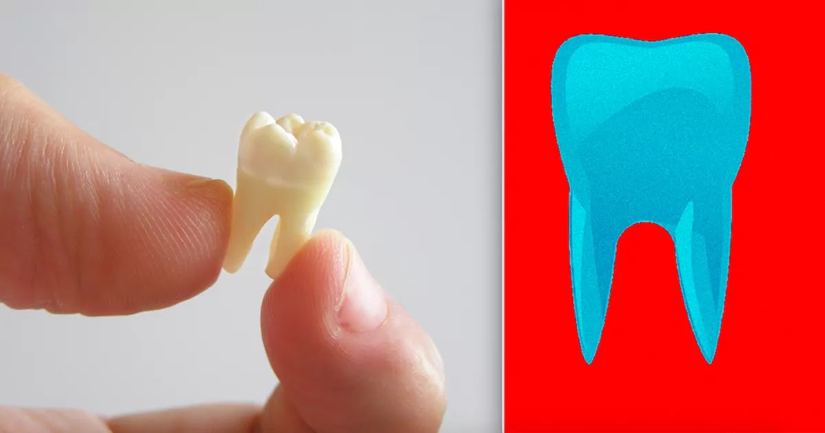 Scientists In Japan Develop Treatment That Can Regrow Teeth