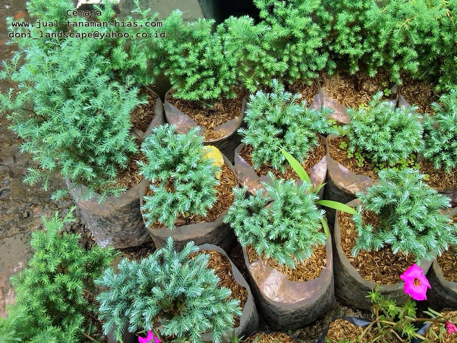 Jasa Pembuatan Taman, Supler tanaman Hias, Tukang Taman Modern, Tukang Kolam