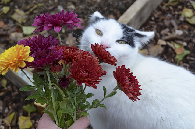 our beautiful cat mouser smelling flowers