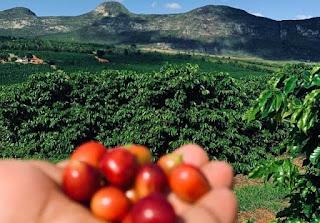 Cafés produzidos por mulheres em Ibicoara, Piatã e Vitória da Conquista, estão entre os melhores do Brasil