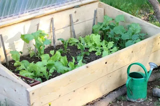 Easy DIY Backyard Garden Ideas