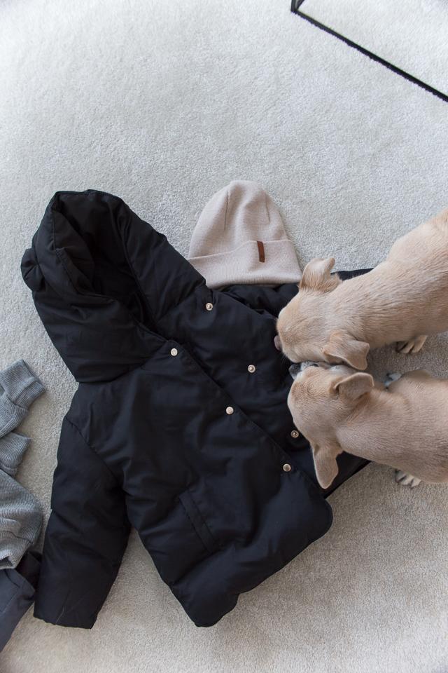 chihuahua, zara untuvatakki, taaperon vaatteet