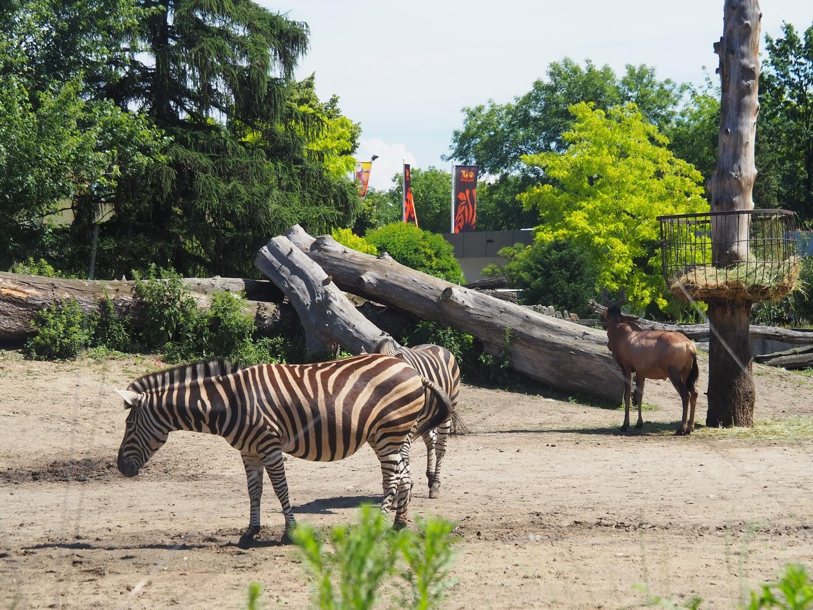 Zoo Wrocław informacje praktyczne
