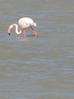 Flamingo Tigaki Salt Pan