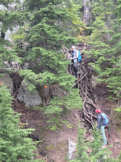 Photo of two people on a root ladder, (a section of tangled exposed roots on a nearly vertical slope) one at the top and one at the bottom. The roots to be climbed are about two stories tall. There is an orange trail marker on the tree beside the root ladder.