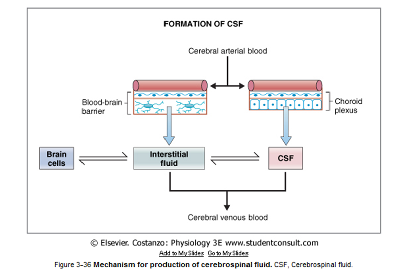Komponen pembentuk dalam sawar darah otak adalah  27459506d5