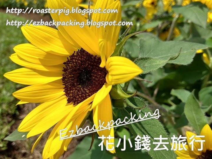 香港動植物公園 向日葵