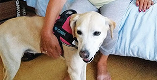 Aπό αδέσποτη στον Πύργο, σκυλίτσα θεραπείας στην Ελβετία