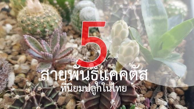 สายพันธุ์แคคตัสที่นิยมปลูกในไทย