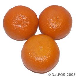jeruk murcot