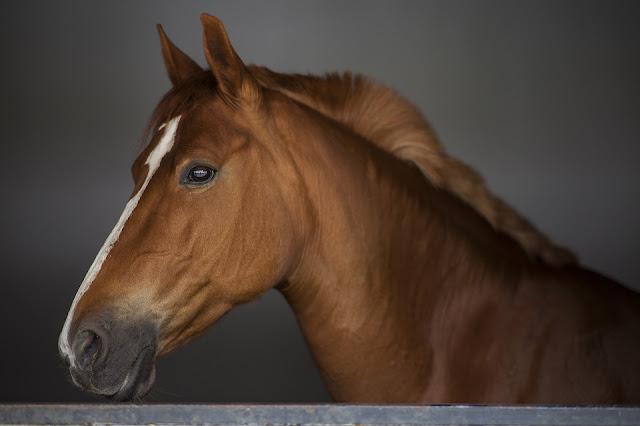 "alt=""Horse"""