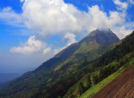 Munnar Hill Resorts