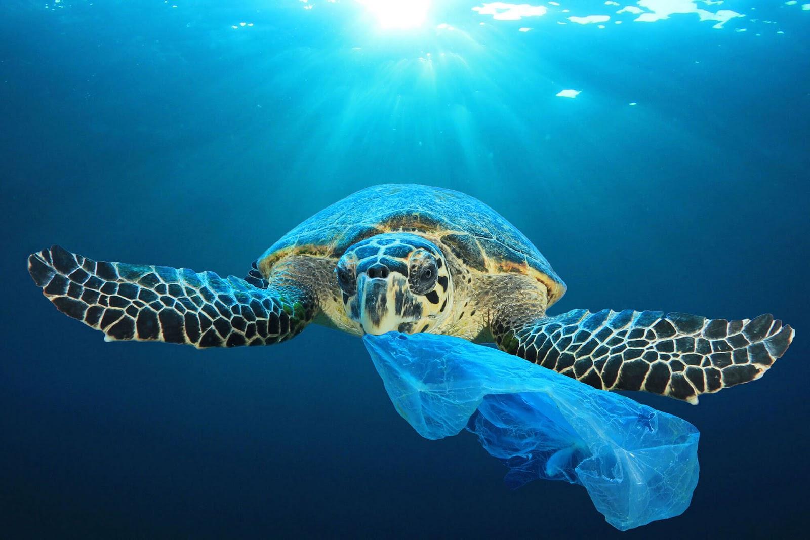 ratujmy naszą Planetę, zwierzęta na wyginięciu, zatrute wody, plastik w oceanach