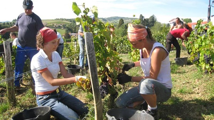 working-holiday-farm-work-fruit-picking1 Job Application Form New Zealand on blank generic, part time, free generic,