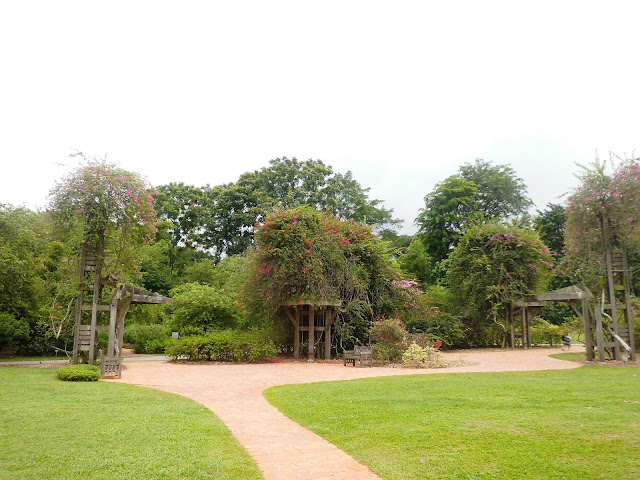 bougenvile garden singapore