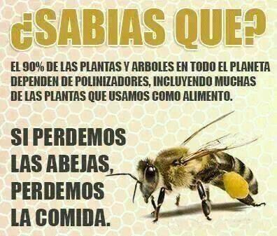 si perdemos las abejas perdemos la comida