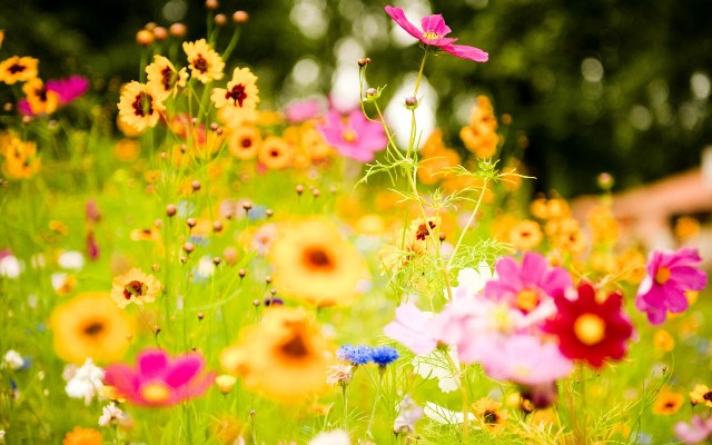 Pictures Of Pretty Spring Flowers