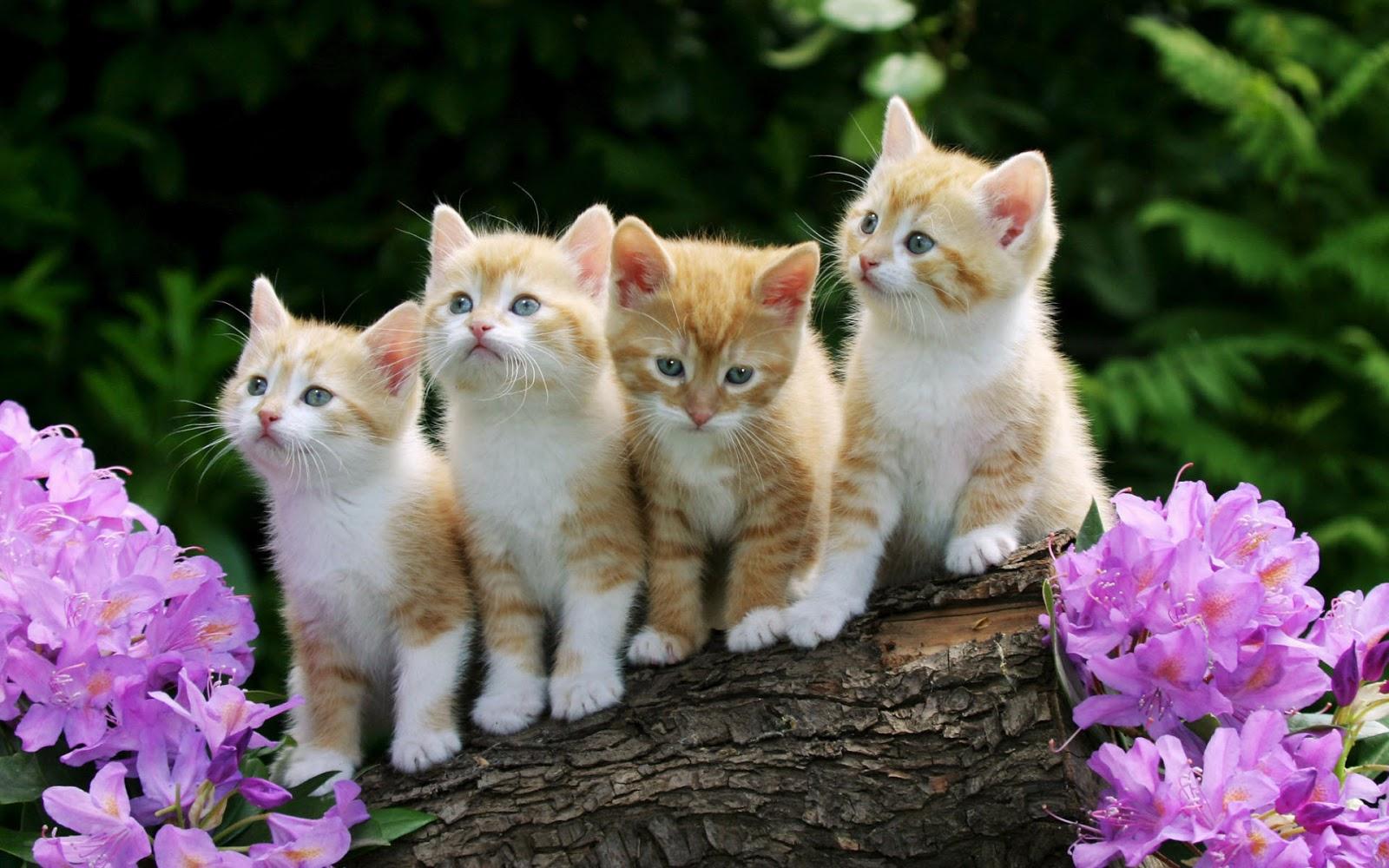 Cute kittens hd wallpaper free download yahoo tv blog - Cute kitten wallpaper free download ...