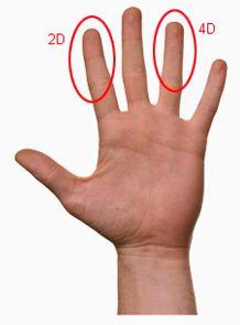 Das Fingerlängenverhältniss zeigt die Entwicklung von Gehirnstrukturen (3 Tests)