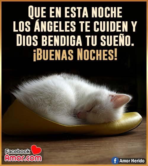 imagen de gato buenas noches