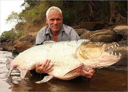 Для приготовления рыбного бульона употребляется частиковая рыба (судак, окунь и др.), а также красная рыба - осетрина, севрюга, белуга.