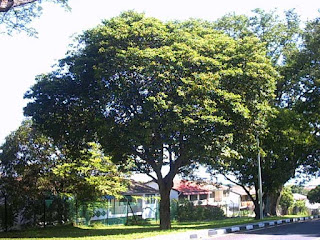 Jenis pohon poneduh