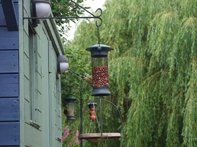 Photo of bird feeder placed directly outside a window