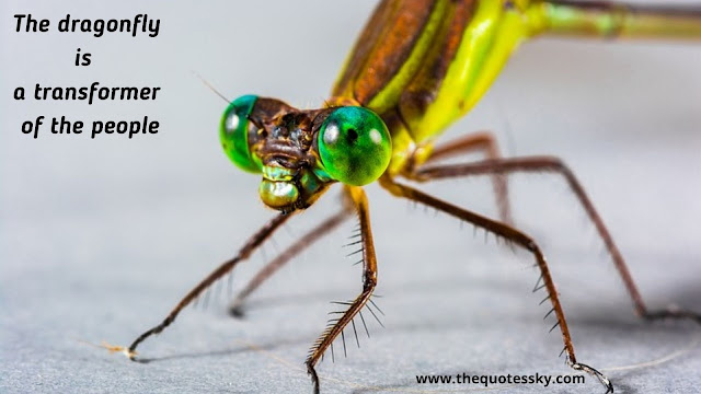 87+ Cute Dragonfly Quotes, Sayings, and Captions for Instagram By thequotessky