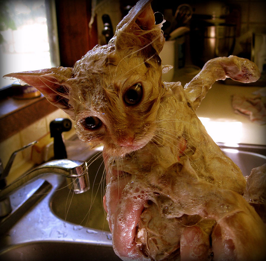 funny-wet-cats-15