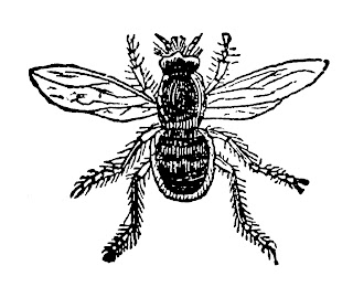 insect bee image digital clip art transfer download