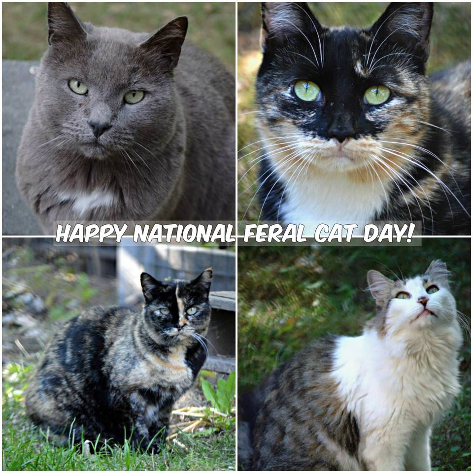 National Feral Cat Day Wishes Photos